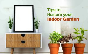 Tips to Nurture your indoor garden
