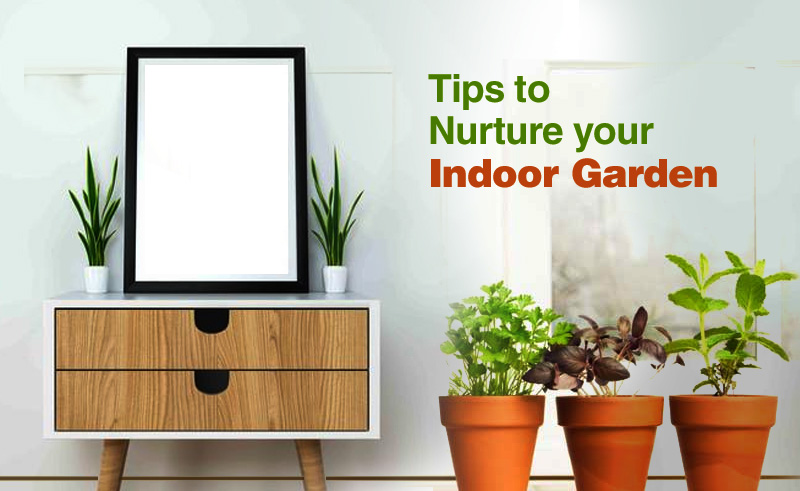 8 Tips to Nurture your indoor garden